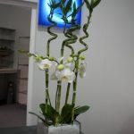 Blumen wilheine Hannover - Event-Floristik - Dekoration Räume