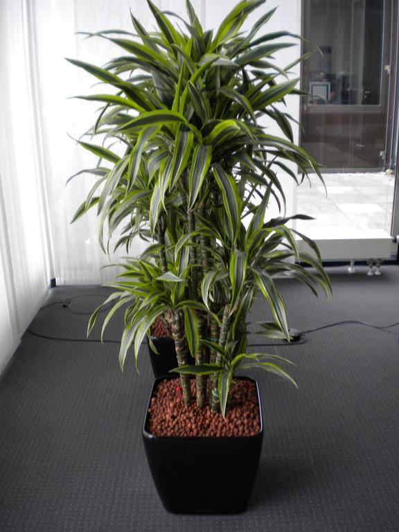 Hydrokultur blumen wilheine hannover for Zimmerpflanzen hydrokultur