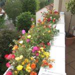 Blumen wilheine Hannover - Balkonkästen