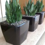 Blumen wilheine Hannover - Service - Hydrokultur